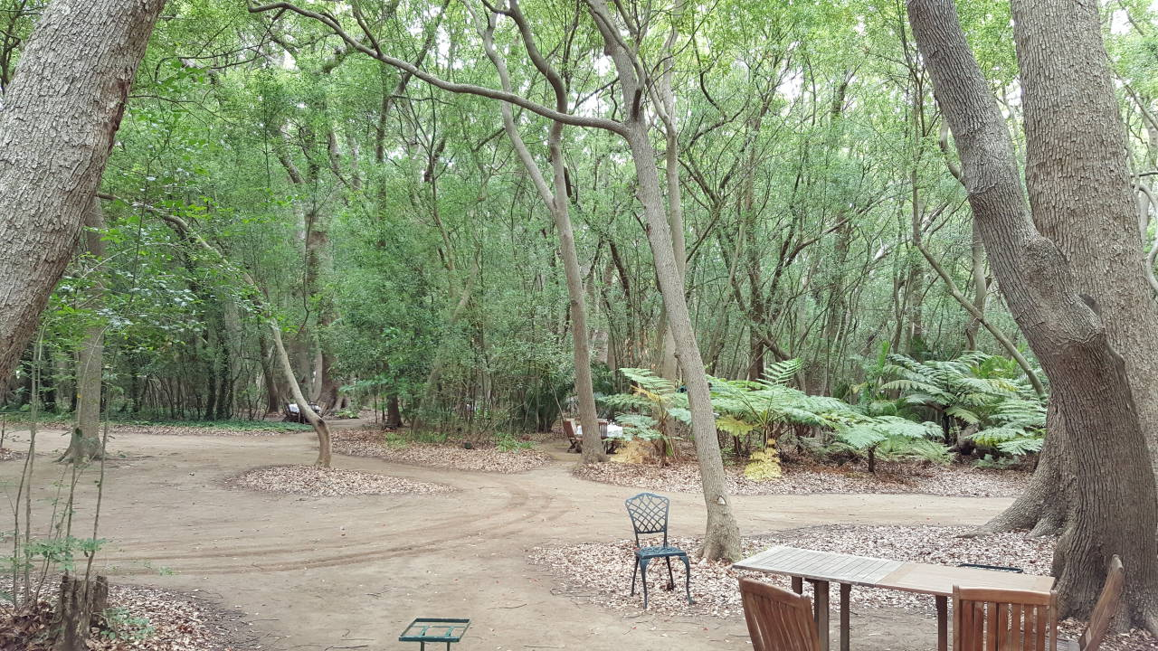 Vergelegen Picnic Forest Area