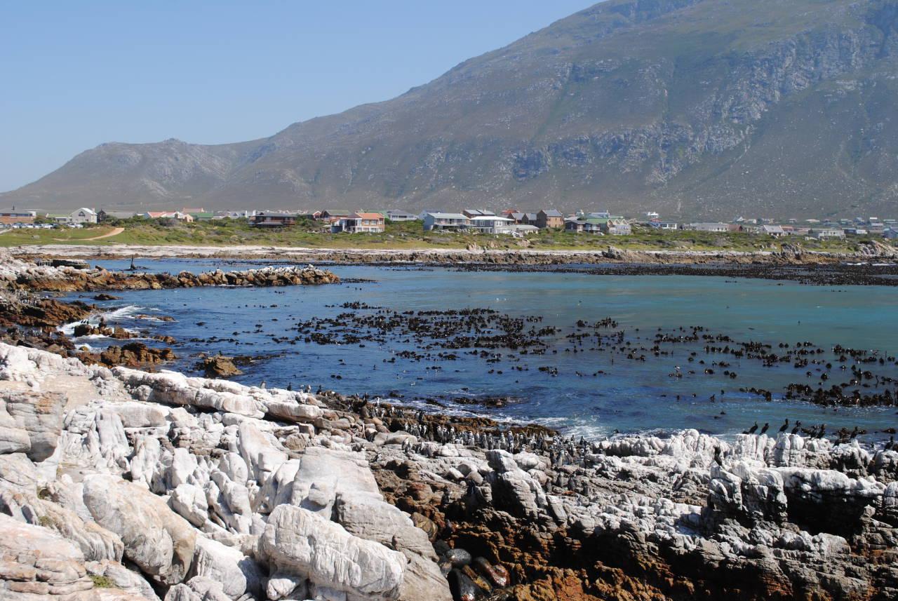 Stony point Penguins, Bettys bay