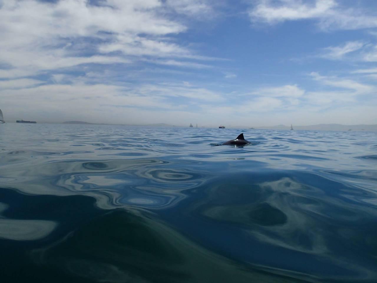 Kaskazi Kayaks