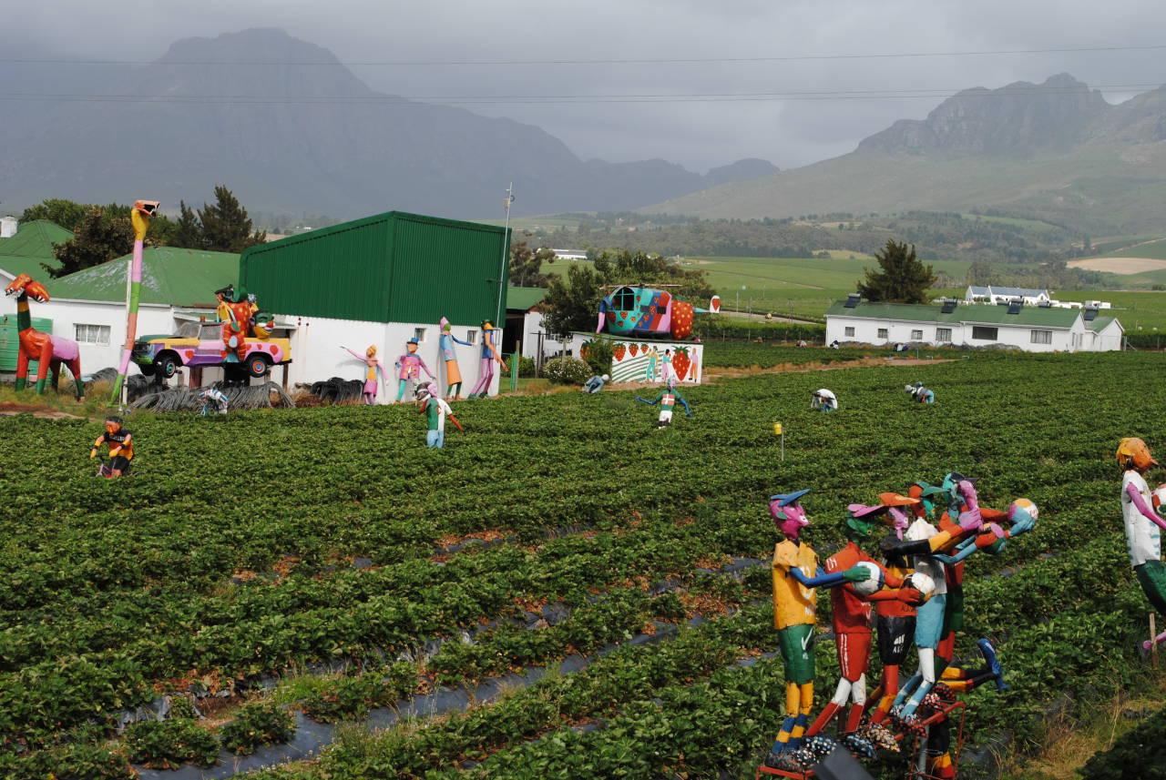 Mooiberge Strawberry Farm
