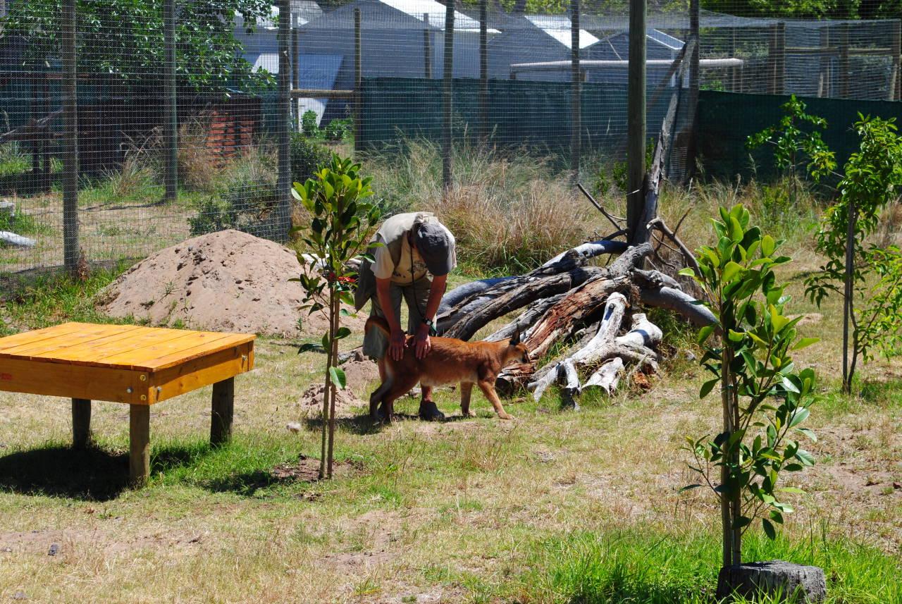 Paardevlei Cheetah Outreach