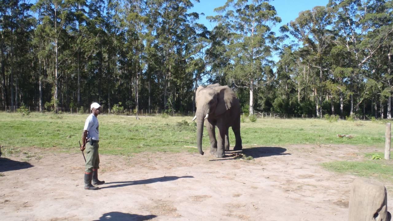 Elephant Sanctuary, The Crags