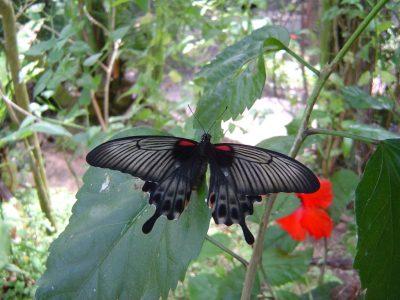 Butterfly World Tropical Garden