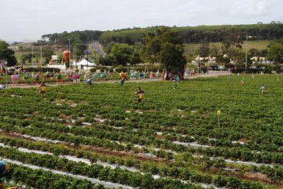 Mooiberge Farmstall